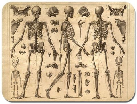 Vintage Skeleton System Poster Mouse Mat Anatomy Learning High Quality Mouse Pad